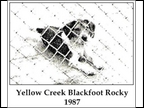 Yellow Creek Blackfoot Rocky
