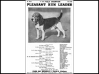Pleasant Run Leader