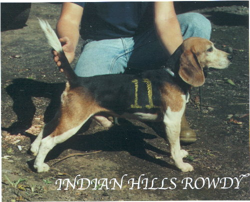 Indian Hills Rowdy