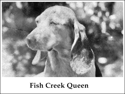 Fish Creek Queen