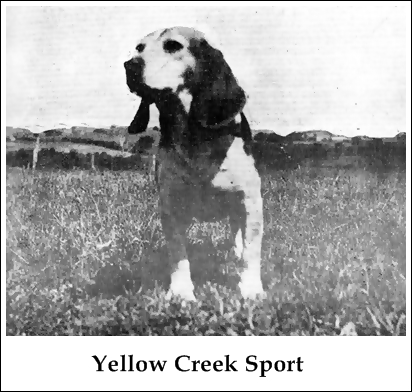 Yellow Creek Sport