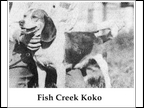Fish Creek Koko