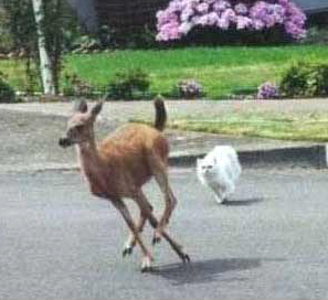 Deer Chased By A Cat?