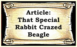 scroll rabbit crazed beagle